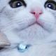 ペット ナイスな表情トーナメントブログトーナメント - 猫ブログ村