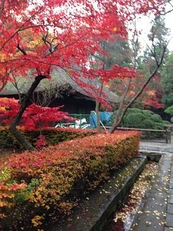平林寺と紅葉