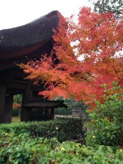 平林寺と紅葉2