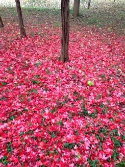 赤のじゅうたん