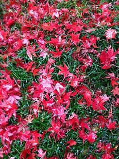 赤のじゅうたん2