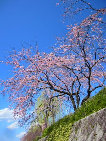 2012_04_04_19.jpg