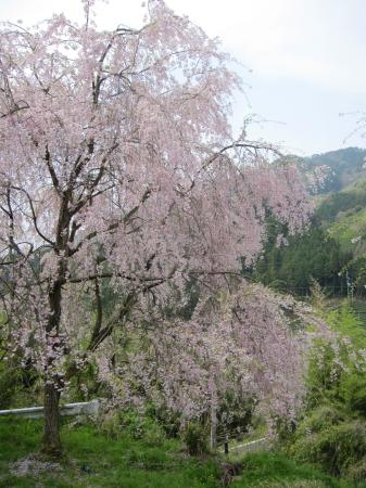 2012_04_25_07.jpg