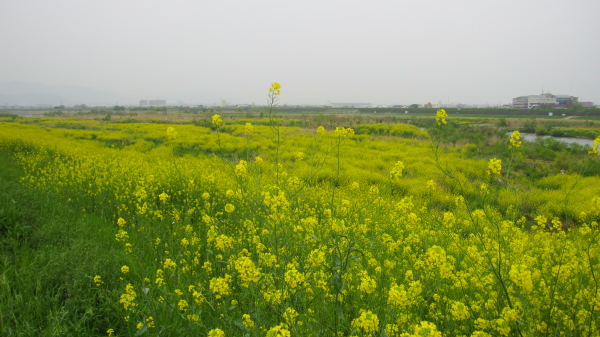 2012_04_25_15.jpg