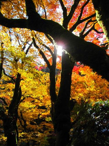 2012_11_22_12.jpg