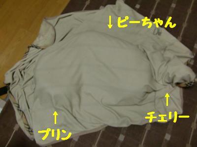 CIMG0087_convert_20110323070535.jpg