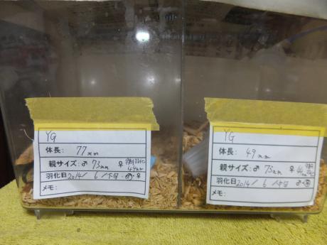 黄色い鮎が好きさん協賛品。。。No2。。。