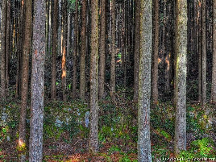 智頭の林業景観