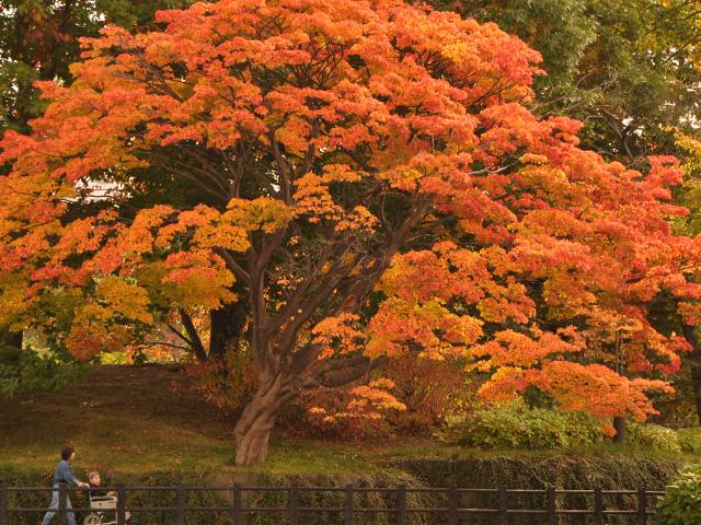 2010・10中島公園紅葉写真