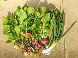 12-8野菜3