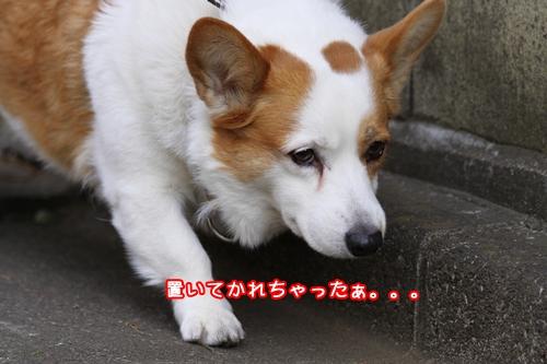008_20101222190120.jpg