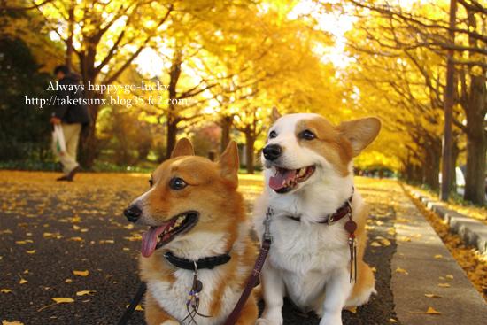 013_20121116212624.jpg