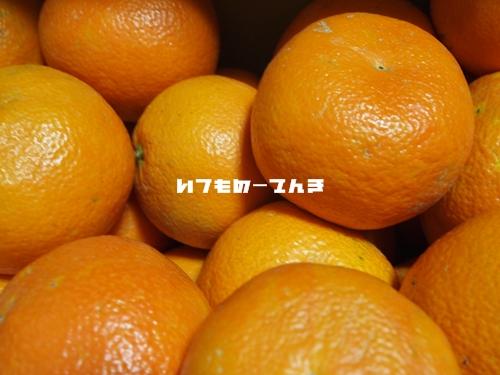 016_20110216181543.jpg