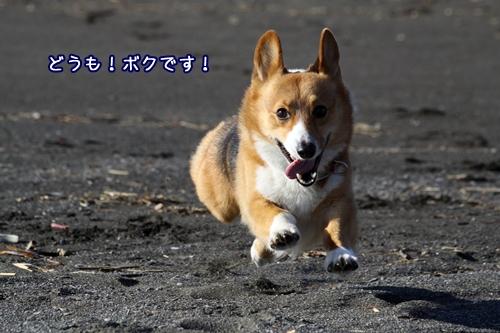 030_20101230212732.jpg