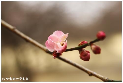 036_20120307194024.jpg