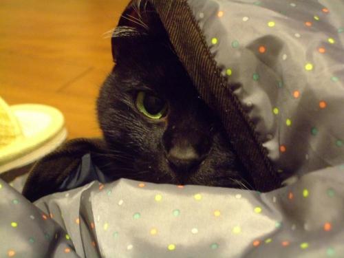 黒猫のタコちゃん(^-^)防寒スカートの中にくるまって潜んでいます♪2013.12.28