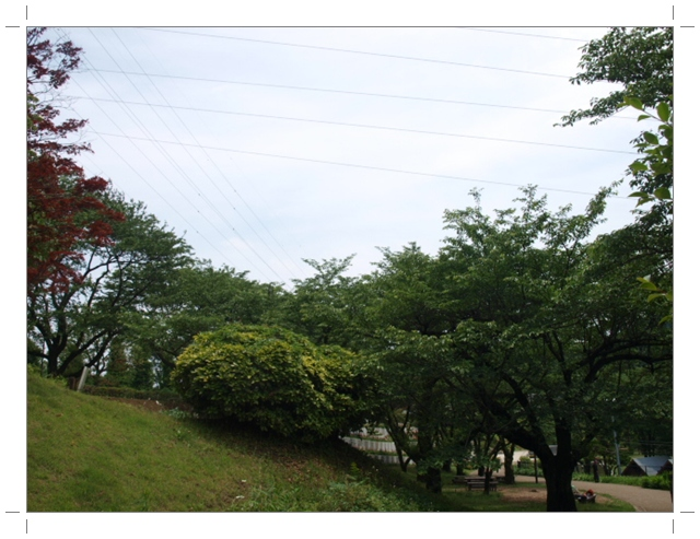 P6073698.jpg