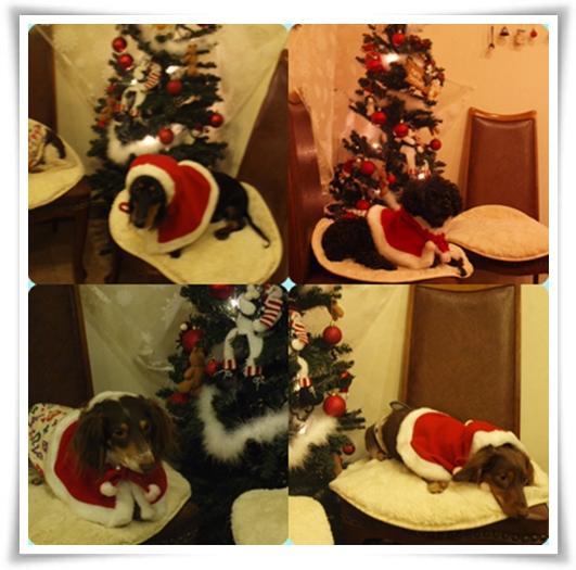 cats187.jpg