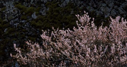 梅の里ー7