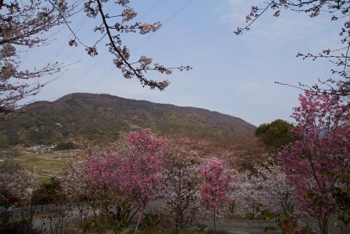 朝日山ー5