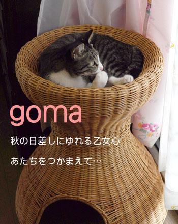 goma07.jpg