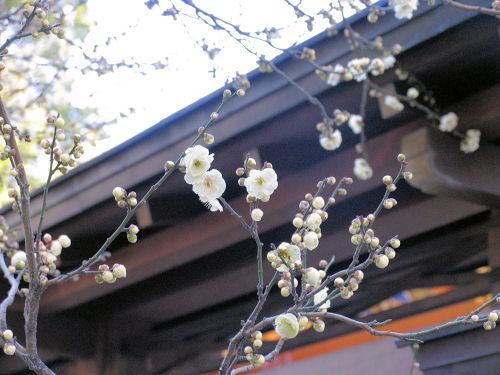 120227yushima06.jpg