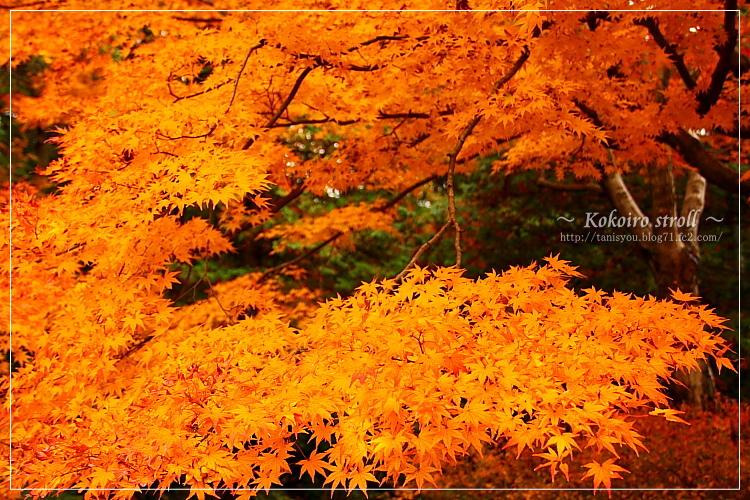 Autumntint