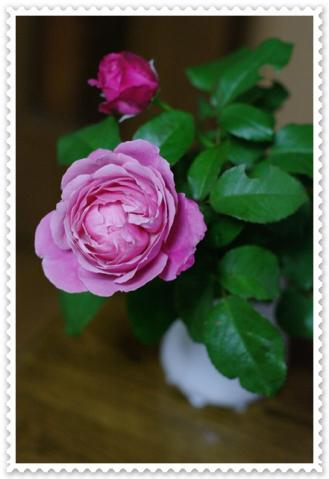 rose2 023