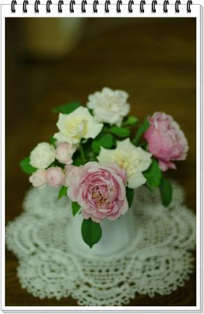 cp.rose 008