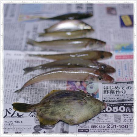 fish 003