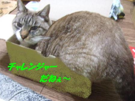 2_20110227190106.jpg