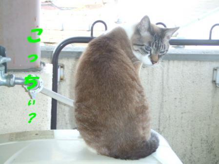 DSCF18361.jpg