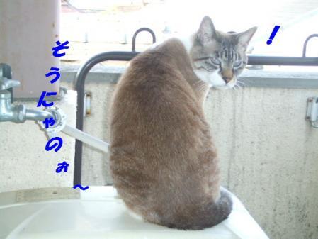 DSCF18371.jpg