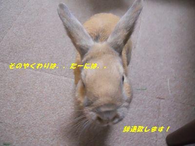 001_20111202234519.jpg