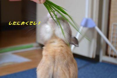 001_20120520143307.jpg