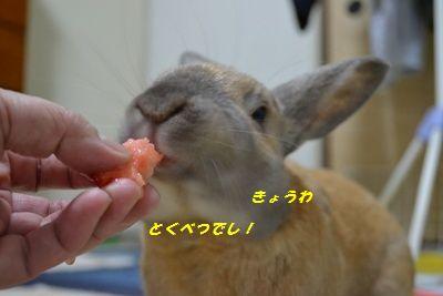 004_20120303121818.jpg