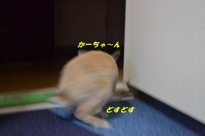 006_20120215192620.jpg