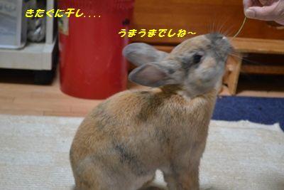 010_20120127144153.jpg