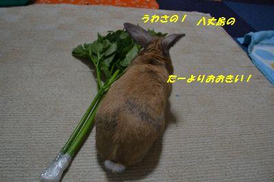 011_20120324133545.jpg