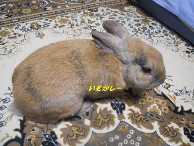 015_20111217134626.jpg