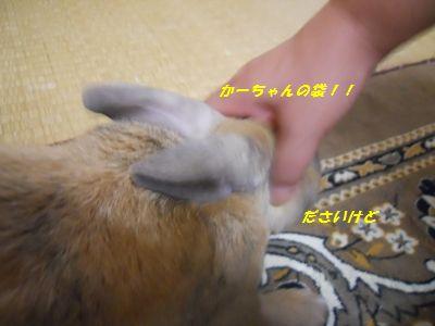 016_20111221192056.jpg