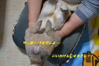 017_20120211125041.jpg