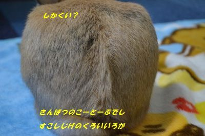 022_20120211124958.jpg