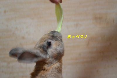 024_20120117182107.jpg