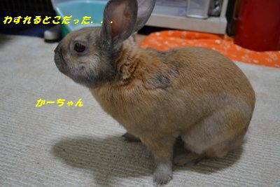 024_20120324133500.jpg