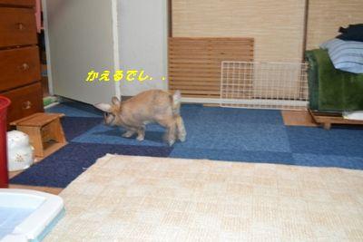 028_20111206121709.jpg