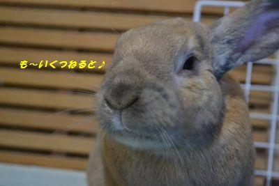 030_20111227193244.jpg