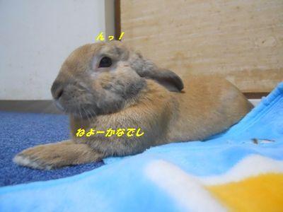 036_20120110145104.jpg