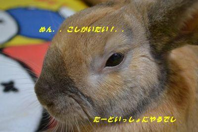 040_20120309201500.jpg