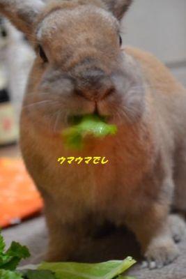 046_20120117182127.jpg